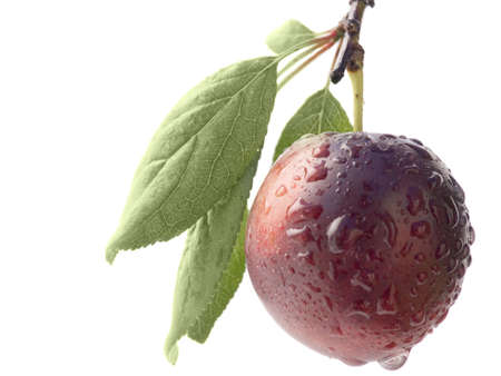 Fruits ripe violet sweet plums with drops of dew on a white background it is isolated Stock Photo