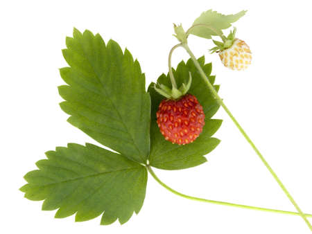 Wild strawberry on a white background it is isolated