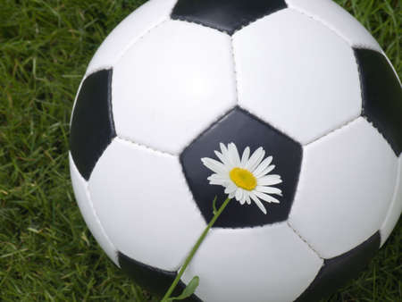 Soccer ball on a lawn from a green grass with a flower of a chamomile photo