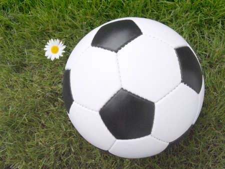 Soccer ball on a lawn from a green grass with a flower of a chamomile Stock Photo - 3225918