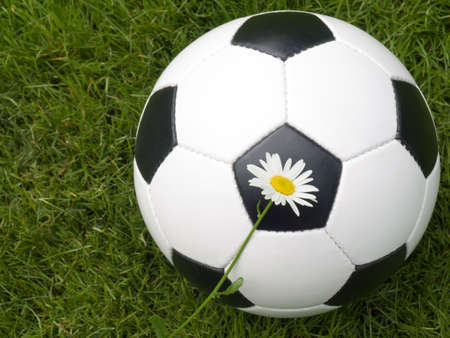 Soccer ball on a lawn from a green grass with a flower of a chamomile Stock Photo - 3231123