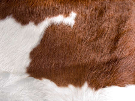 brown and white real cow skin texture photo