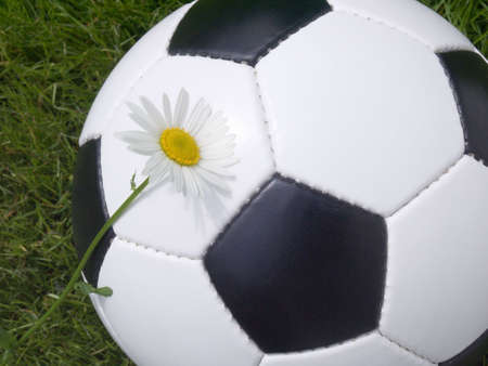 Soccer ball on a lawn from a green grass with a flower of a chamomile Stock Photo - 3251383