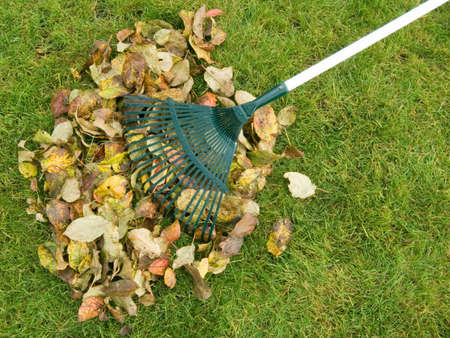 bright housekeeping: Cleaning of autumn leaves on a green lawn