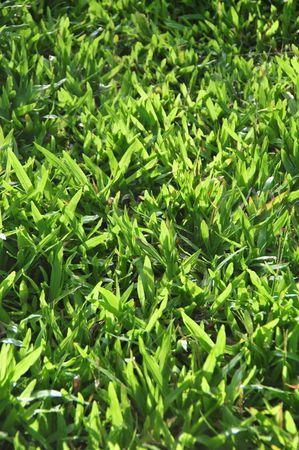 greengrass: grassland