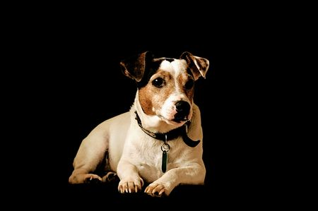 companions: Jack Russell Terrier Stock Photo