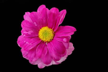 Pink Flower and dew drops