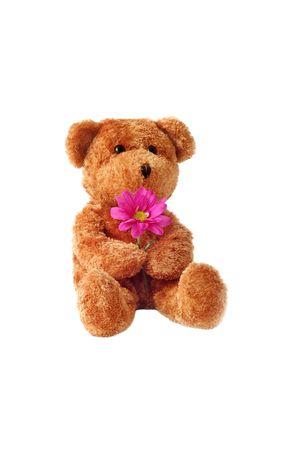 Teddybear and Daisy Stock Photo