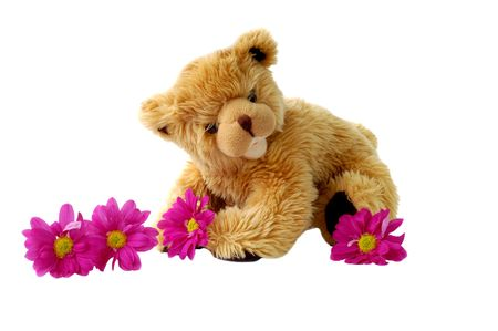 Teddy and daisies Stock Photo