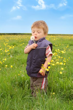 Toddler holding a Dandelion Stock Photo