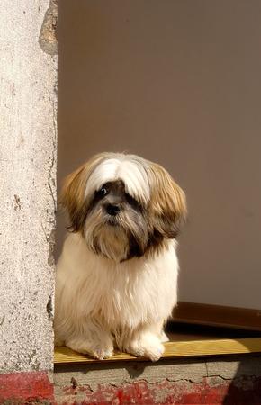 Little dog in derelect doorway