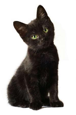 Adorable black kitten Stock Photo