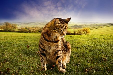 Farmyard cat sitting on grass with rural landscape in background.