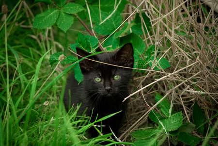 Adorable 8 week old kitten hides in long grass.