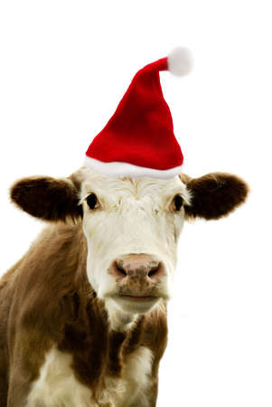 Portrait of a cow wearing a christmas hat.