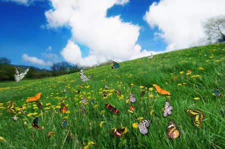Assorted Species of Butterflies in a dandelion Meadow