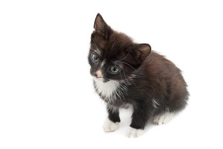 Cute black and white kitten  Stock Photo