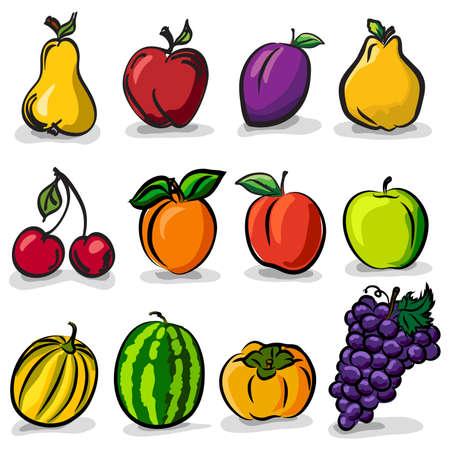mango leaf: Temperate fruits sketch drawing vector set