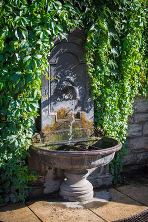 garden fountain: Drinking fountain wall covered by plants Stock Photo