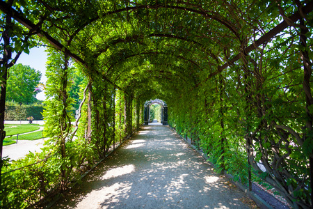Walkway under a green natural tunnel photo