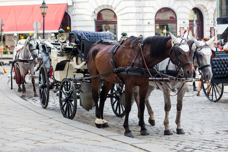 horse cart: Traditional horse-driven carriage at Hofburg palace, Vienna, Austria