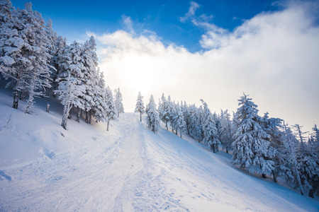 snow covered mountain: Ski forest path with pine trees covered in snow on winter season in Poiana Brasov, Romania Stock Photo
