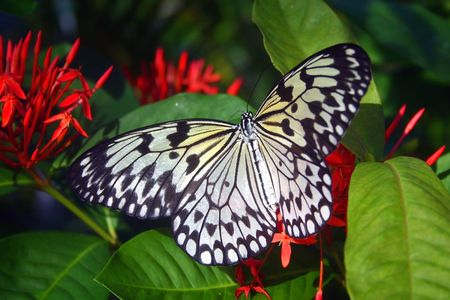 Butterfly with red flowers