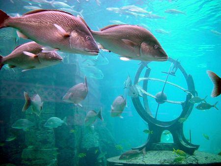 aqualung: Vista subacquea