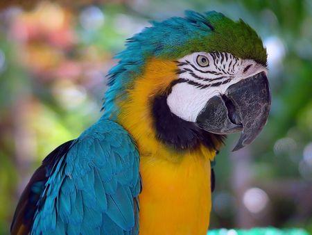 parot: Green parrot