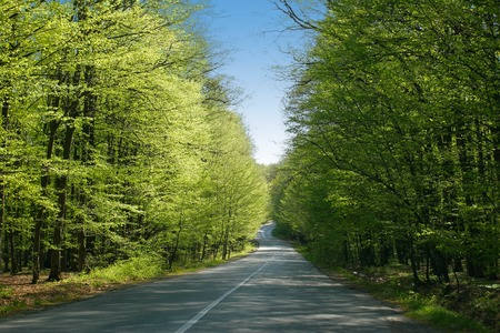 sinuous: Road trough a green forest