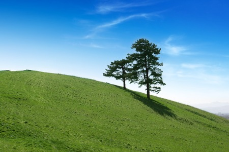 Trees on a green field with blue sky Stock Photo