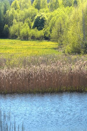 Forest on meadow with yellow flowers and blue lake.  photo
