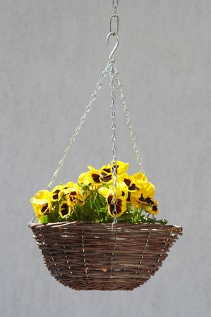 Wicker with yellow flowers hanging on chain at bright, sunny day.