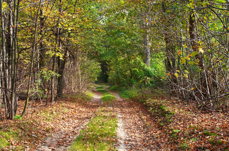road autumnal: Colorful forest road with autumnal leaves and trees. In autumn series. Stock Photo
