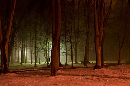 glum: Forest in the night. Colorful lights. Night shot.