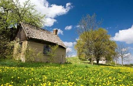 View of meadow with yellow flowers, small building, blue sky and green grass.
