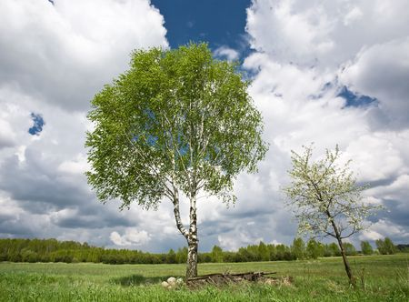 Birch and small blossoming tree against blue sky and white clouds. Stock Photo - 3020958