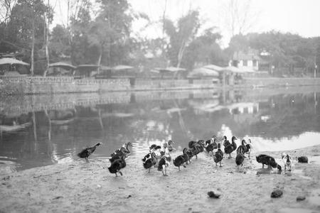 Pingle Ancient Town Reklamní fotografie
