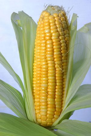 a full view of maize on the white background photo