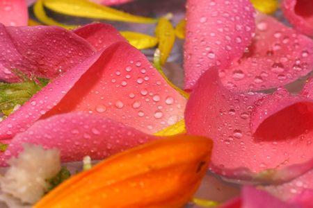 indulgere: Rosa rosa petalo freschi e naturali sui ciottoli il fiore sfondo. Adatto per terme e relax.