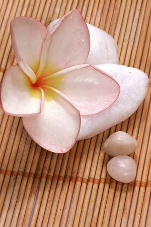 destress: fresh frangipane flowers and pebbles on the rattan background