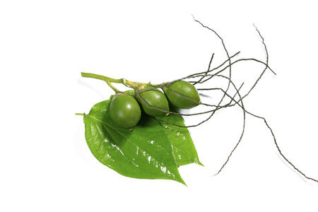 betelnut: The oldwomen usually use this as hospitality way to welcome the guest, beside they consider this is a medicine to make the teeth stronger, betel combine with areca belong to the vietnam legend about love.