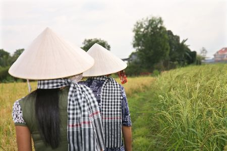 Women wearing traditional Vietnamese hats working in rice paddy with a famous southern bandanna Stock Photo - 6695879