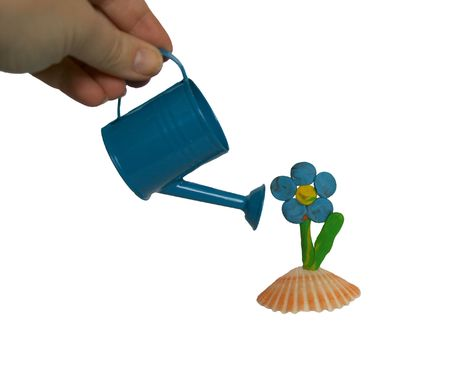 wateringcan: Handmade plasticine flower on the shell with blue watering-can