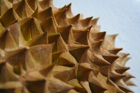 Shell (husk) of the prized durian fruit.