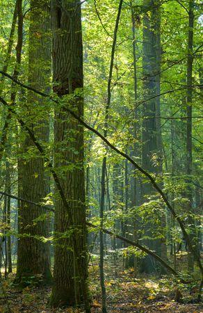 Trees illuminated by morning light photo