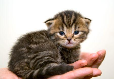 Kitten on a palm