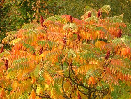 Herbstfarben Lizenzfreie Bilder