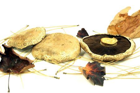 gills: Portabella Mushrooms over white background. Portabello (Portobello) Mushrooms cap side and (spores) gills side views.