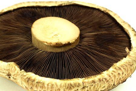 gills: Portabello (Portobello, Portabella) Mushroom (spores) gills side close up view macro photograph.  Stock Photo